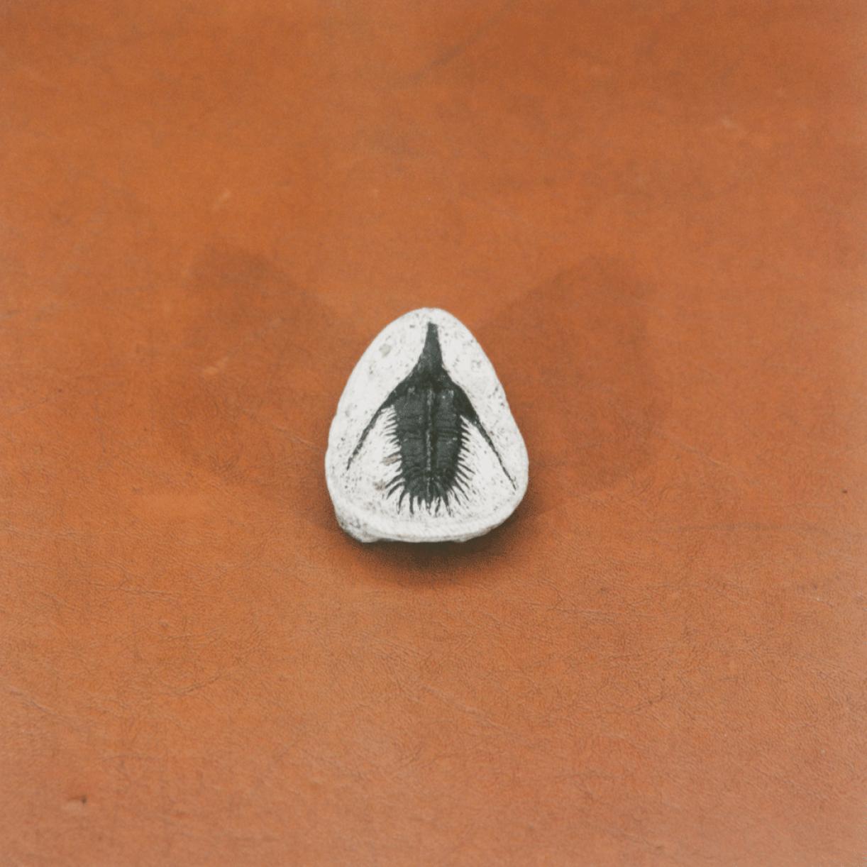 Untitled (Berringer's Lying Stones), 2014-2015, chromogenic print, 30 x 30 cm