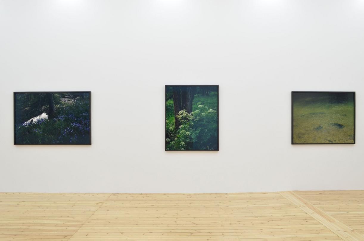 Balthsar Burkhard, Landscape, Exhibition view Sfeir-Semler Gallery Hamburg, 2014