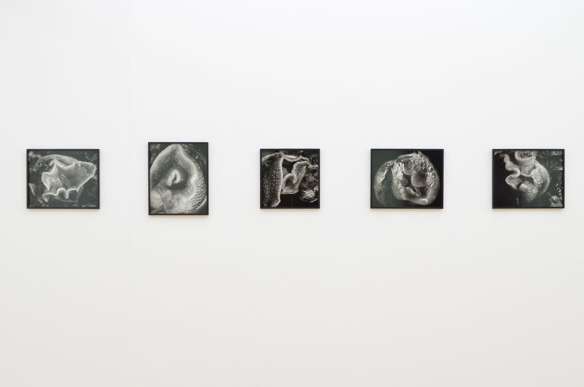 Balthasar Burkhard, Escargot, 1992, Exhibition view Sfeir-Semler Gallery Hamburg, 2014