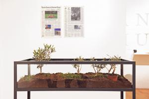 After 12 years & United States of Palestine Times, 2008-2015, Metal, glass, soil, five olive trees & two newspaper pages, Variable Dimensions; Newspapers 55.8 x 36.4 cm, Edition 3 + 2 AP
